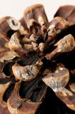 Beautiful pine cone texture Stock Photo