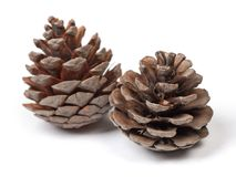 Beautiful pine cones Stock Image