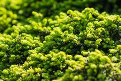 Beautiful pine green pattern. In the park Stock Photos