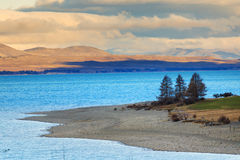 Beautiful pine and mountain  land scape of pukaki lake along the Stock Photos