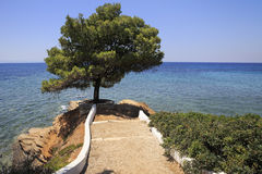 Beautiful pine on a stone ledge into the Aegean Sea. Stock Image
