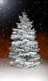 Beautiful pine tree covered in snow and ice at night Stock Images
