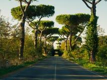 Beautiful pine trees and footbridge Stock Photo