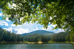 Beautiful pine trees on  mountains Royalty Free Stock Images