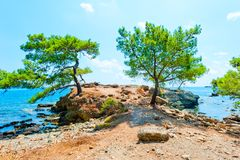 Beautiful pines grow Stock Images