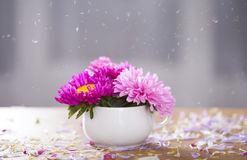 Beautiful pink aster flowers and falling petals Royalty Free Stock Photography