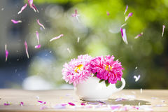 Beautiful pink aster flowers and falling petals Royalty Free Stock Photos