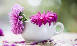 Beautiful pink aster flowers and falling petals Stock Photos