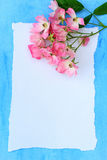 Beautiful pink ballerina roses on blue painted background. Stock Photos