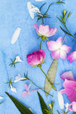 Beautiful pink ballerina roses on blue painted background. Stock Photography