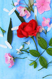 Beautiful pink ballerina roses on blue painted background. Royalty Free Stock Photo