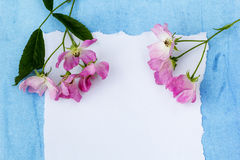 Beautiful pink ballerina roses on blue painted and white paper. Stock Photography