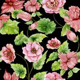 Beautiful pink begonia flowers with leaves on black background. Seamless floral pattern. Watercolor painting. Hand painted botanical illustration. Wallpaper Stock Illustration