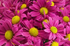 Beautiful pink bell flowers background Royalty Free Stock Image