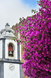 Beautiful pink bougainvillea flowers in Obidos, Portugal Stock Image