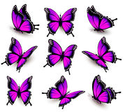Beautiful of pink butterfly in different positions. Vector Stock Image