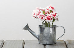 Beautiful pink carnation flowers in silver watering can Royalty Free Stock Image