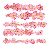 Beautiful pink cherry blossom borders set. Royalty Free Stock Images