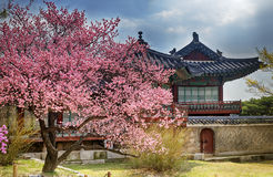 Beautiful pink cherry blossom (Sakura) flower, and with vintage Royalty Free Stock Images