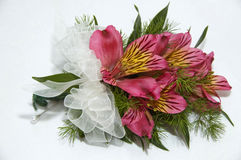 Beautiful pink corsage Stock Photography