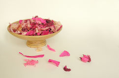 Beautiful pink dry flowers. On a light background Royalty Free Stock Images