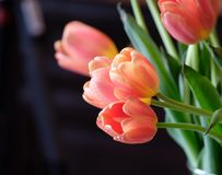 Dutch pink tulips profile. Beautiful pink dutch tulips with green stems profiled against a black background stock photo