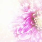 Beautiful pink floral background Stock Photos