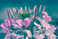 Beautiful pink floral use as background. Cross process. Stock Photos