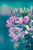 Beautiful pink floral use as background. Cross process. Stock Images