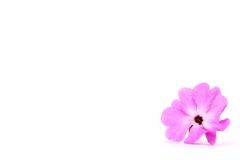 Beautiful pink flower Stock Photos
