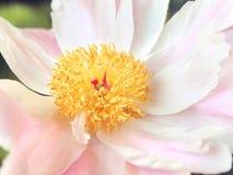 Beautiful Pink Flower stock image
