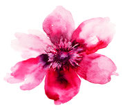 Beautiful Pink flower Royalty Free Stock Image