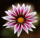 Beautiful pink flower. Artistic view Stock Image