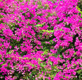Beautiful pink flower background. Stock Images