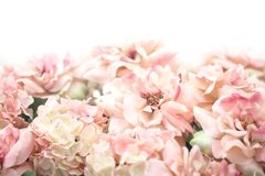 Beautiful pink flower background. royalty free stock photo