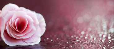 Beautiful pink flower banner Stock Photography