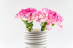 Beautiful pink flower in black and white vase  on white backgrou Stock Image