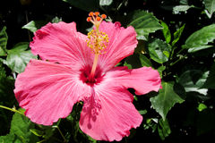 Beautiful pink flower in blossom stock photos