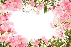 Beautiful pink flower border on white isolated. Background with space for text stock photo