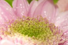 Beautiful pink flower closeup Stock Photo