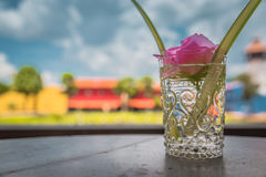 Beautiful pink flower in glass vase. Royalty Free Stock Photo