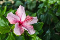 Beautiful pink flower stock photography