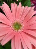 Beautiful pink flower with green center Stock Image