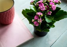 Beautiful pink flower in a pot cup and book Stock Photos