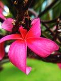 Beautiful Pink flower in sun light royalty free stock photos