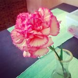 Beautiful pink flower on the table royalty free stock photography