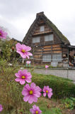 Beautiful pink flower with traiditional Japanese house at Shirak Royalty Free Stock Photo