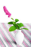 Beautiful pink flower in a vase. Isolated on white Stock Photography