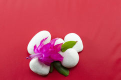 Beautiful pink flower on white pebbles Royalty Free Stock Photos
