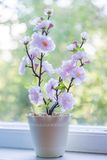 Beautiful Pink Flower in Window Stock Images